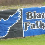 Blaue Falken